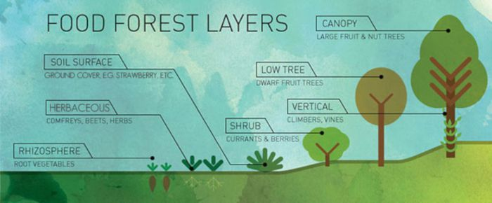 Food Forest Layers